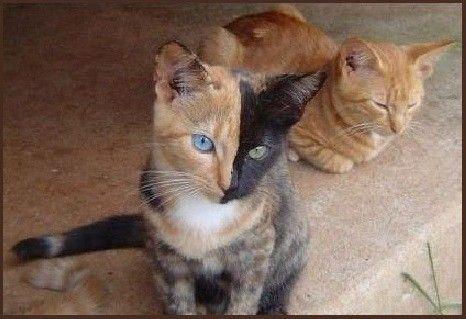 venus chat